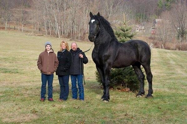 Now this is a horse. He stands 19 hands high and currently is the Percheron supreme world champion! http://t.co/XDqxJMV6Na