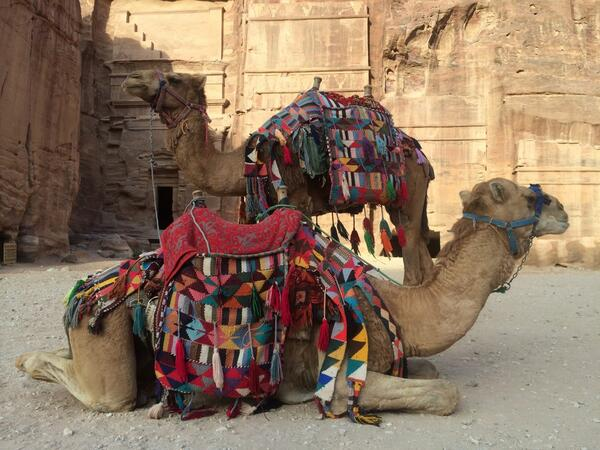 The Camels of Petra, Jordan. || @VisitJordan #tryingstuffinjordan @Columbia1938 http://t.co/9jtazSJ4Gq