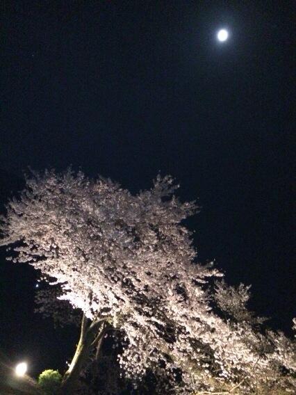 桜の木の下には人が埋まってるというのは、あながち嘘ではない気がする。 http://t.co/tzLADjrJkV