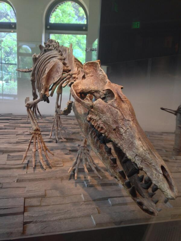 Whales used to walk. This never ceases to amaze me. @NHMLA http://t.co/ltAveZjTno