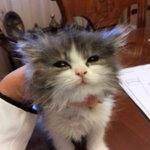 Adorable little kitten http://t.co/i8LWYzPTqI