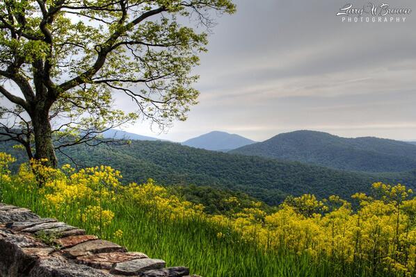 """@larrywbrown: Thornton Hollow Overlook (North District) - Shenandoah National Park, #Virginia #vaoutdoors #LOVEVA http://t.co/QVotw7VJV3"""