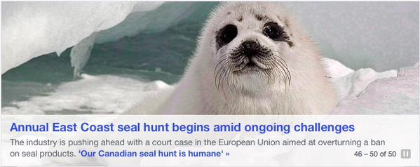 Um, I'm not sure that @YahooCanadaNews got the memo that hunting whitecoats is illegal. #SealHunt http://t.co/i8fKf9ADJv