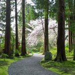 RT @Miss604: RT @rhartnup: Calm and beauty in Nitobe Memorial Garden. #Vancouver #ubc #cherryblossom @Miss604 http://t.co/knq28ZP161