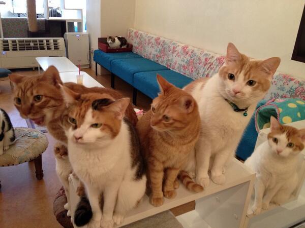 ある日のおやつ待機の図。今日も首を伸ばしてあなたのおやつを待ってます! #cat #neko #猫 http://t.co/gkqls2HEB0