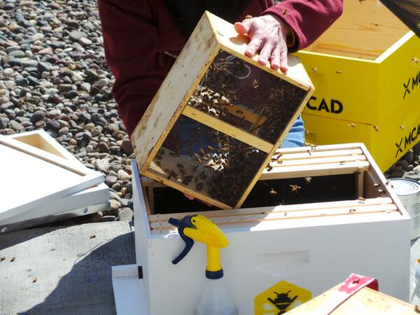 We partnered with @UMNBeeLab_Squad to install some beehives at MCAD! More photos here: http://t.co/leMifQvDuo http://t.co/AanMV5IAKf