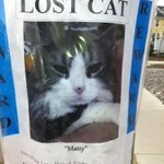 RT @HumphreyBunny: Lost Cat poster in McKenzie Towne, Calgary, Alberta - grey & white long hair Matty @YYCLostPet #yyc #lostcat #calgary http://t.co/3dYx0pxkGN