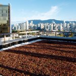 #vancouver amazing view from the finished #greenroof at Neelu Bachra on broadway http://t.co/lGe1QqudJ6