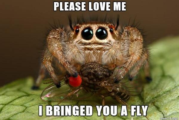 """@clawfish: @joefishy The most sad-adorable picture of a spider ever: http://t.co/zILGN0Aw9w"""" love it"" love this :)"