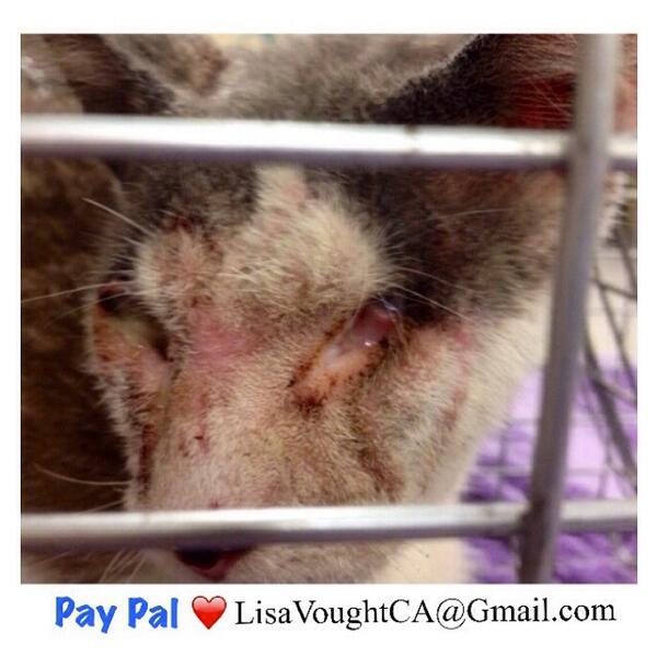 BLIND FERAL CAT RESCUED 🙏 DESPERATE PLEA FOR HELP W / MEDICAL TREATMENT ✔️DONATE ✔️ PAY PAL ✔️ SAVE A LIFE http://t.co/PfSzXPNIWy