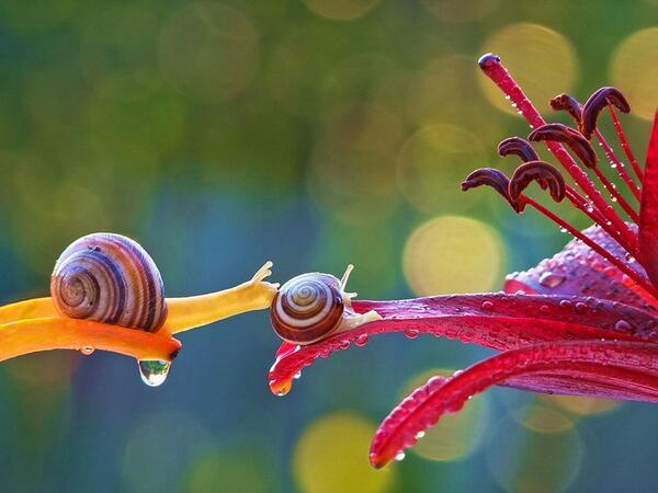 Magical macro photos of snails by Vyacheslav Mishchenko http://t.co/0XimDM0jj7 http://t.co/UJQa80xKCl