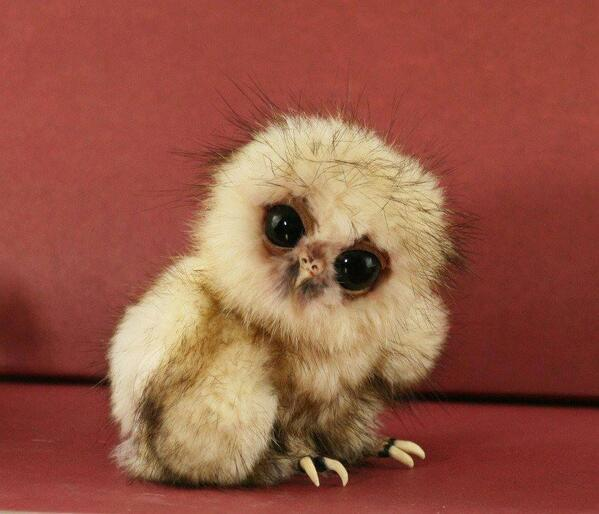 That's what a baby owl looks like: http://t.co/QtuBfRwn1d