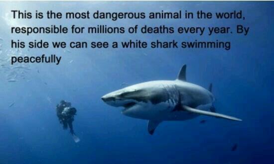A little bit of perspective on sharks #shark #mostdangerous http://t.co/5ejg8a7khU