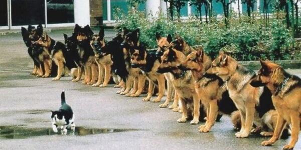 Police dogs final test: self control. http://t.co/sZlu1545Y7