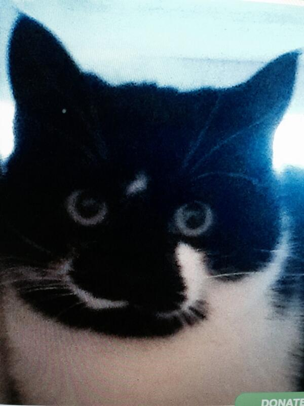 Please help find 'Rita' my friends cat who has gone missing near Kilcroney Lane, Kilmacanogue http://t.co/hQcylajGjJ