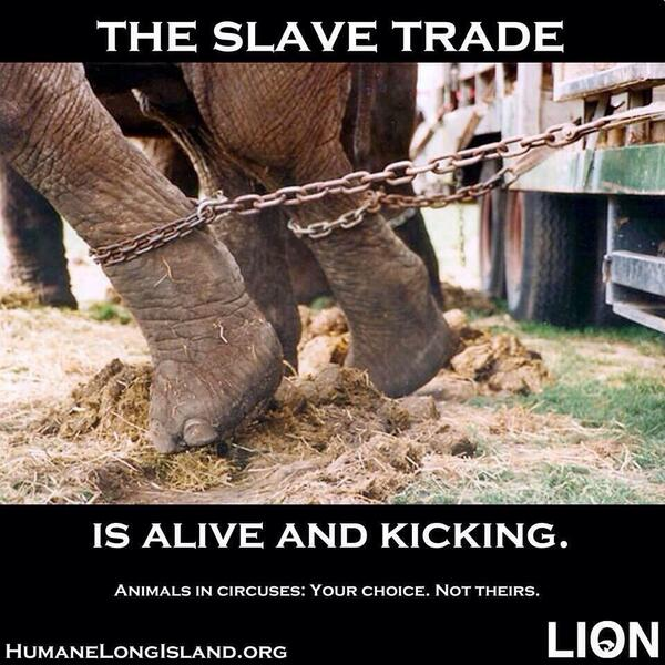Please RT @Canine_Rights Circus Elephants their Chains & Shackles via @MJTKPsychology  http://t.co/n8mzN1eWwi
