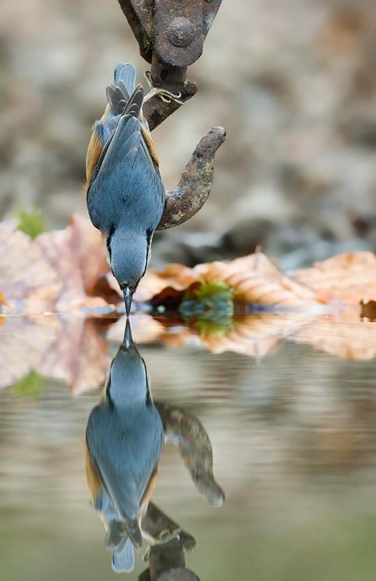 "Smart bird using hook via ""@LYNAOU: @streetSinger9 @scriptave @yandmariabella @kerstinnopens @perezsenor73 @eddieobi http://t.co/KvQFdFMnml"""