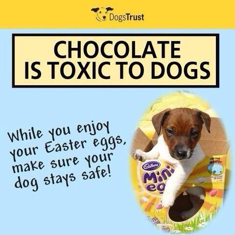 The long Easter weekend has begun :). Please remember to keep those chocolate eggs away from the pooch! http://t.co/1sHuntALD1