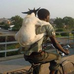 Bae: Come over Me: nah I gotta watch my neighbors goat Bae: my parents aren't home Me: http://t.co/T0txK6gUsg