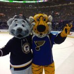 RT @Truman_TheTiger: In honor of the big win last night and the cup race! Gotta represent my home state! #MIZ #LGB #WeAllBleedBlue http://t.co/SGkDDIJdcl