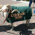 RT @CSUCamtheRam: My plaza game is strong today. RT @CSULSC: Drop by the plaza to meet a local celebrity! #ILoveCSU http://t.co/nmnPN4sSTg