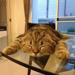"RT @akustatikk: ""@CatPornx: Gravity set too high . http://t.co/PaPMb3TPvx"""