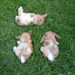 RT @BuzzFeed: 21 Extremely Stoned Bunnies http://t.co/cfyWhAHNml http://t.co/iNf0pe0mNc