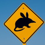 RT @bradatslice: Kids keep a look out for #Easter Bilby crossings http://t.co/ppuKOhTEAR