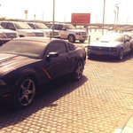 WOW! So many Mustangs joining in! #Mustang50 #FordMustang50 #Dubai #MyDubai http://t.co/gyqVEijxKu