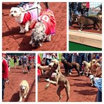 Bring on the pups! Welcome to Pups in the Park! #Nats http://t.co/0eY7x4jyky