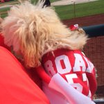 RT @Holdenradio: Tanner Roarks pup with jersey. #Nats @wusa9 @GameOnWUSA9 http://t.co/pl2r3KEaBh