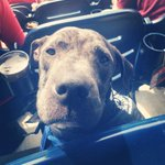 Mooses first #pupsinthepark @Nationals #Natitude , reppin his @atlasvetDC bandana #avfaithful http://t.co/xIQ6S9BEJf