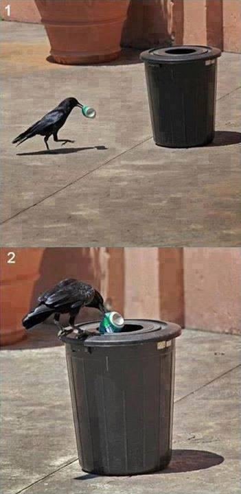 Humans should learn from this crow. http://t.co/SewPdx1vQX