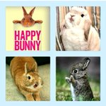 RT @BeautyByGeeks: Happy #Easter! Now that animal testings been banned in cosmetics were sure the world has a lot more Happy Bunnies! http://t.co/auJd7NzJf0