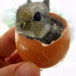 RT @BuzzFeed: TINY BUNNY!! http://t.co/zGNorUwk87