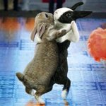RT @JusticeWillett: HOPPY EASTER EVERY BUNNY http://t.co/pWtX5SCIXO