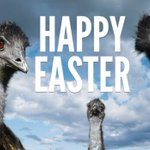 RT @ThePaperLights: From us to you! #HappyEaster #easter #EasterSunday http://t.co/Kv2yqbGb8l