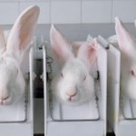 RT @avc_uk: One Minute Action: Sign our petition to ban cruel experiments on rabbits this #Easter - http://t.co/WK2Izz8fP0 http://t.co/9vzHZBOPeb