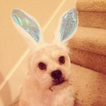 A new costume & treats, I love #Easter! #HappyEaster #Austin & Central Texas! #easterdog http://t.co/Mn6j1Fg9nE