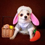 RT @DJD: Ollie & I wish everyone a Happy Easter #easter http://t.co/ZVSn82tfTY