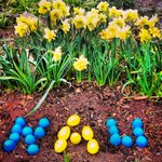 The Easter bunny paid a visit and even knew our favorite colors. #NAU #blueandgold http://t.co/V3jh6Yk97k