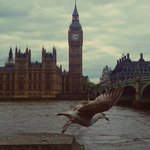 RT @spectrum12345: #nature #icons #London #BIGBEN #loveLondon http://t.co/YySmYQbQtx
