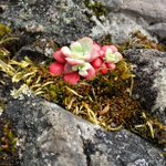 RT @bikerjames: Some of the beautiful but tiny plants at #PipersLagoon Park #Nanaimo http://t.co/vCcSZGw5J9