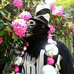 RT @gorillarilla: Happy Easter Family.Friends. RAIDER Nation......its not about the bunny but who created the bunny: Go raiderssssss! http://t.co/9AOIvP0yj6