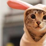 RT @Jessewelle: Cat in a bunny suit. #HappyEaster http://t.co/KaeOa25HfX please RT for jelly beans. http://t.co/vcrkfEnGZo