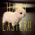 RT @AmyandDevshow: Happy East... Ermagash this is painfully cute... Is that even real?! #Easter #bunny http://t.co/7t30Hnq2Kd