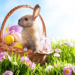 RT @augustushotels: Surprising Facts about the #Easter Bunny http://t.co/5fGYXhsJwa http://t.co/UxEfC5bCcM
