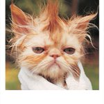 Humidity is going to make our hair do this today. #Damp #Badhairday #OKwx http://t.co/wGUeVXzYeN