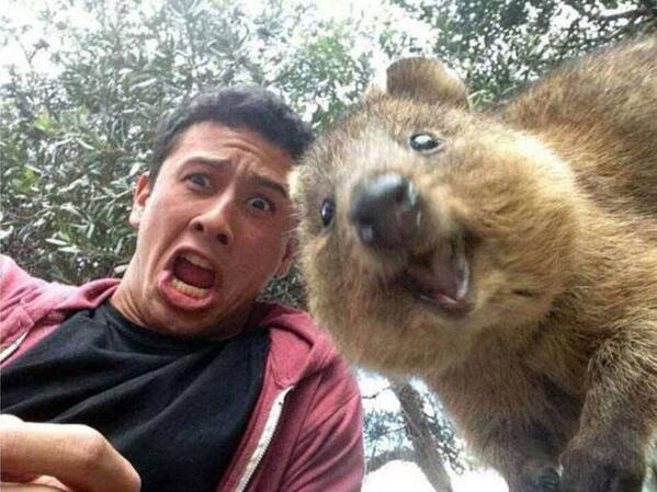 A selfie with QUOKKA - the happiest animal on Earth. http://t.co/EqYCbOC9sk