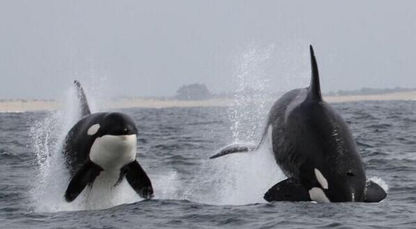":) ""@Pixie_Allen: @jeffrey_ventre bet tilly would love to do this #Blackfish http://t.co/URJnjW00cB"""
